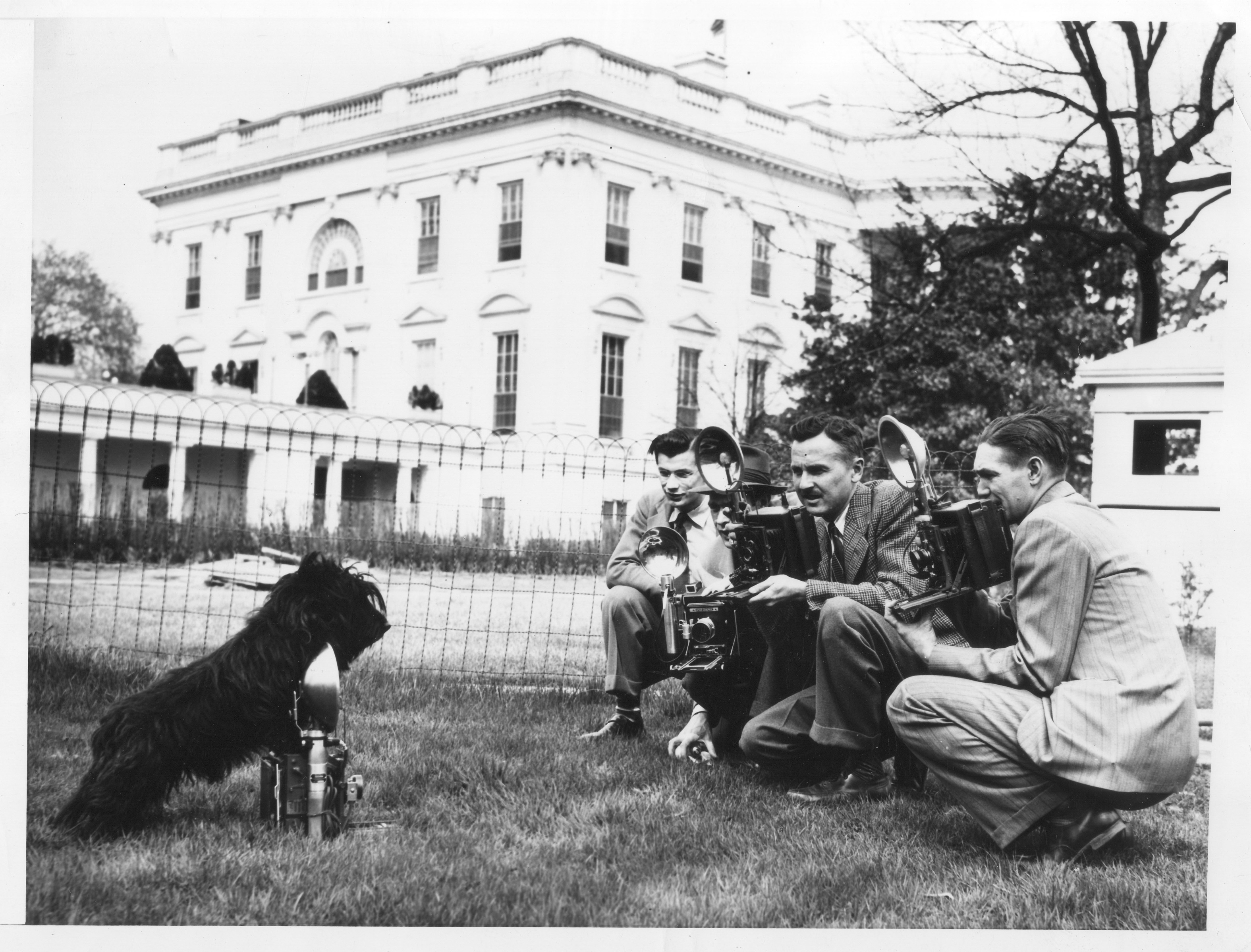 Fala Photographing the Photographers at the White House, Washington, DC, 04/07/1942. (National Archives Identifier 6728525)
